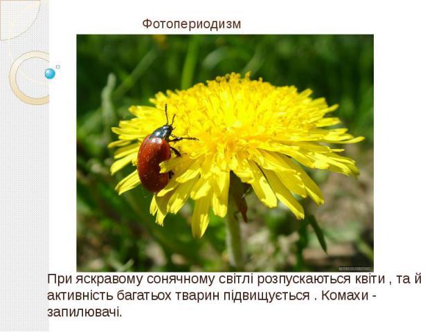 Фотопериодизм При яскравому сонячному світлі розпускаються квіти , та й активність багатьох тварин підвищується . Комахи - запилювачі.