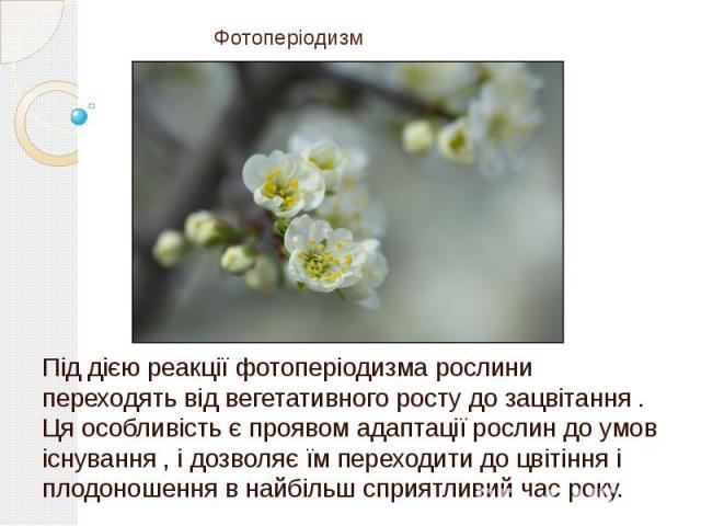 Фотоперіодизм Під дією реакції фотоперіодизма рослини переходять від вегетативного росту до зацвітання . Ця особливість є проявом адаптації рослин до умов існування , і дозволяє їм переходити до цвітіння і плодоношення в найбільш сприятливий час року.