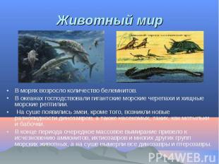 В морях возросло количество белемнитов. В морях возросло количество белемнитов.