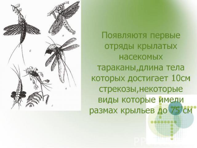 Появляютя первые отряды крылатых насекомых тараканы,длина тела которых достигает 10см стрекозы,некоторые виды которые имели размах крыльев до 75 см