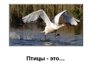 Птицы - это… Птицы - это…