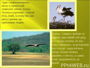 Одне з найвизначніших місць в українській символіці займає лелека. Лелека в укра