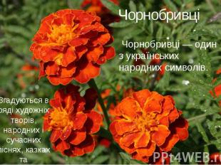 Чорнобривці Чорнобривці — один з українських народних символів.