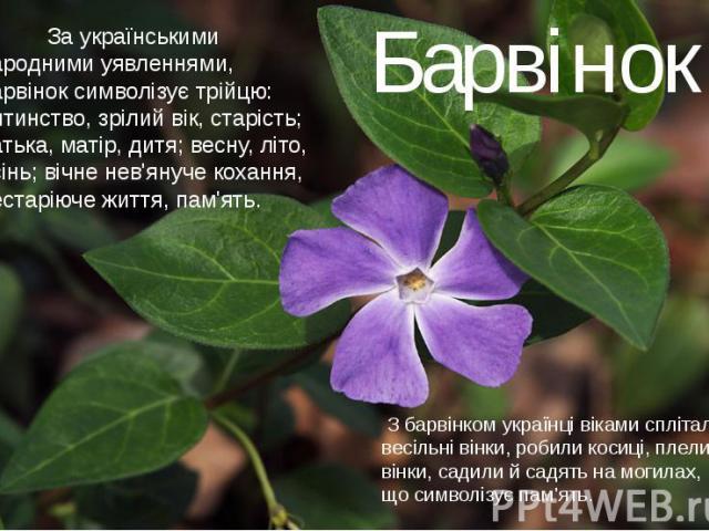 За українськими народними уявленнями, барвінок символізує трійцю: дитинство, зрілий вік, старість; батька, матір, дитя; весну, літо, осінь; вічне нев'януче кохання, нестаріюче життя, пам'ять.