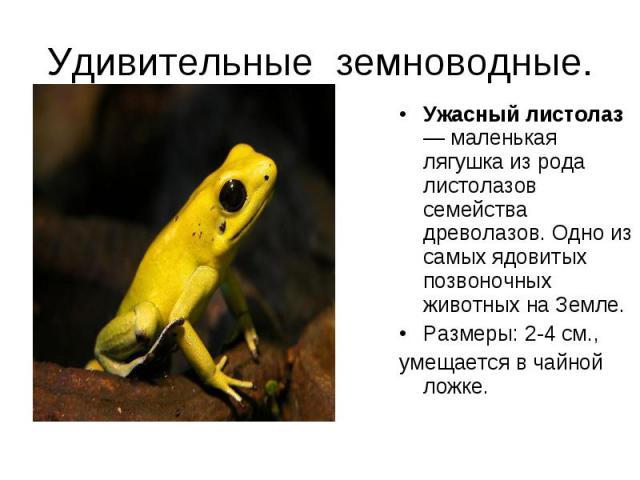 Ужасный листолаз — маленькая лягушка из рода листолазов семейства древолазов. Одно из самых ядовитых позвоночных животных на Земле. Ужасный листолаз — маленькая лягушка из рода листолазов семейства древолазов. Одно из самых ядовитых позвоночных живо…
