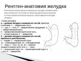 Рентген-анатомия желудкаРентгенологическая картина нормального желудка человека