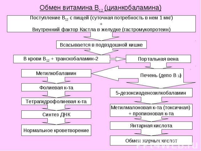 Обмен витамина В12 (цианкобаламина)