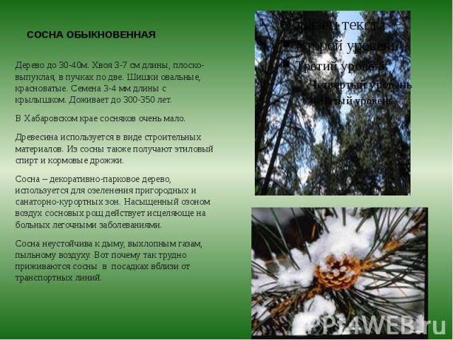 СОСНА ОБЫКНОВЕННАЯ Дерево до 30-40м. Хвоя 3-7 см длины, плоско-выпуклая, в пучках по две. Шишки овальные, красноватые. Семена 3-4 мм длины с крылышком. Доживает до 300-350 лет. В Хабаровском крае сосняков очень мало. Древесина используется в виде ст…