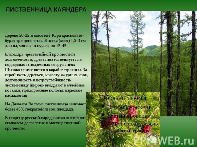 ЛИСТВЕННИЦА КАЯНДЕРА Дерево 20-25 м высотой. Кора красновато-бурая трещиноватая. Листья (хвоя) 1,5-3 см длины, мягкая, в пучках по 25-45. Благодаря чрезвычайной прочности и долговечности, древесина используется в подводных и подземных сооружениях. Ш…