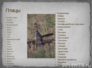Птицы Полярные гагары Поганки Пеликаны Большие бакланы Аисты Ибисы Лебеди Утки Г