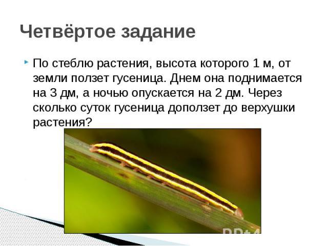 Четвёртое задание По стеблю растения, высота которого 1 м, от земли ползет гусеница. Днем она поднимается на 3 дм, а ночью опускается на 2 дм. Через сколько суток гусеница доползет до верхушки растения?