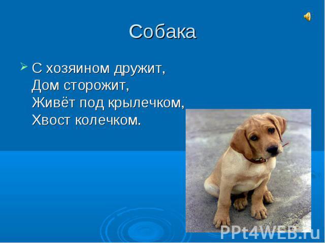 СобакаС хозяином дружит,Дом сторожит,Живёт под крылечком,Хвост колечком.
