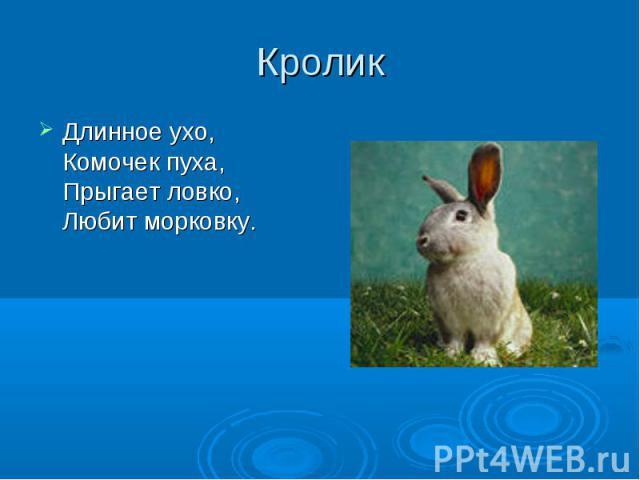 КроликДлинное ухо, Комочек пуха, Прыгает ловко, Любит морковку.