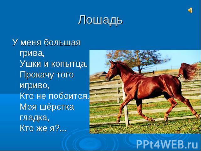 ЛошадьУ меня большая грива,Ушки и копытца.Прокачу того игриво,Кто не побоится.Моя шёрстка гладка,Кто же я?...