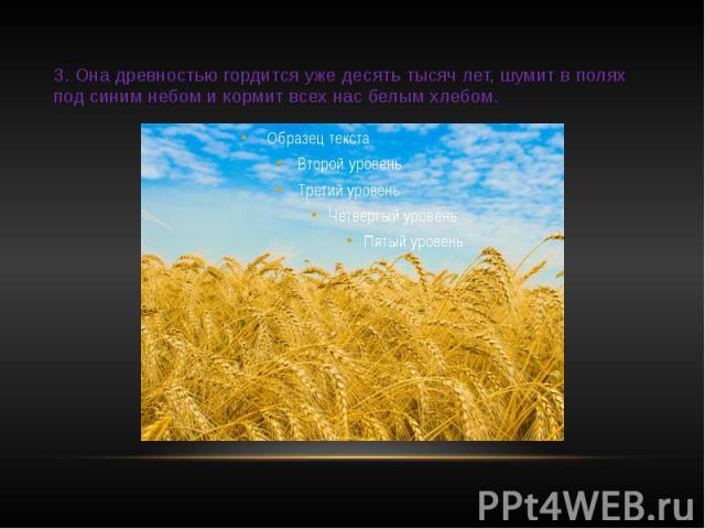 3. Она древностью гордится уже десять тысяч лет, шумит в полях под синим небом и кормит всех нас белым хлебом.