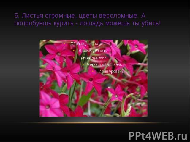 5. Листья огромные, цветы вероломные. А попробуешь курить - лошадь можешь ты убить!