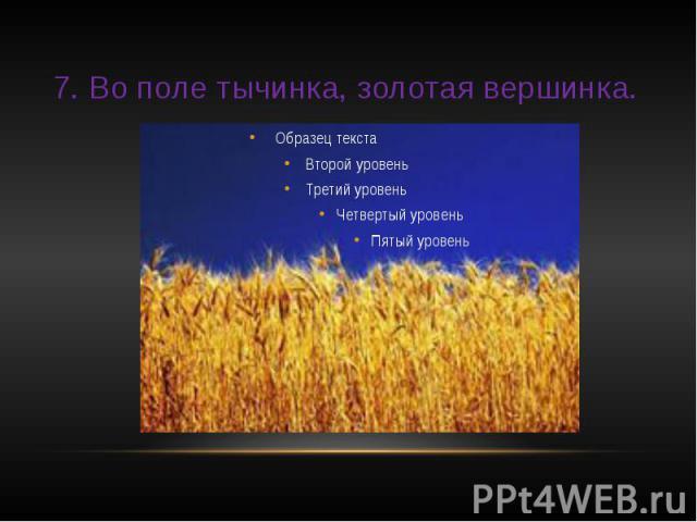 7. Во поле тычинка, золотая вершинка.