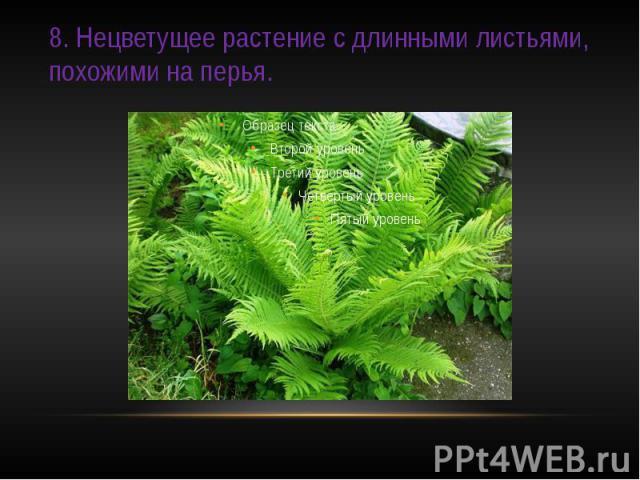 8. Нецветущее растение с длинными листьями, похожими на перья.
