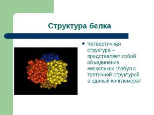 Четвертичная структура – представляет собой объединение нескольких глобул с трет