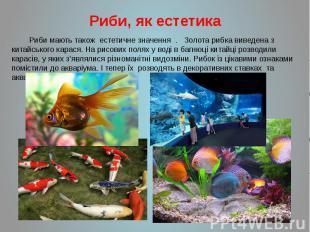 Риби, як естетика