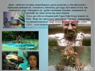 Деякі любителі екстріму, випробовують долю,купаючись у басейні разом з піряньями