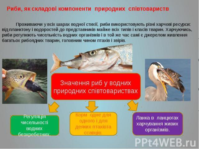 Риби, як складові компоненти природних співтовариств Риби, як складові компоненти природних співтовариств Проживаючи у всіх шарах водної стихії, риби використовують різні харчові ресурси: від планктону і водоростей до представників майже всіх типів …