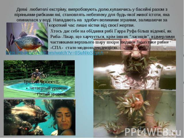 Деякі любителі екстріму, випробовують долю,купаючись у басейні разом з піряньями-рибками які, становлять небезпеку для будь-якої живої істоти, яка опинилася у воді. Нападають на здобич великими зграями, залишаючи за короткий час лише кістки від своє…