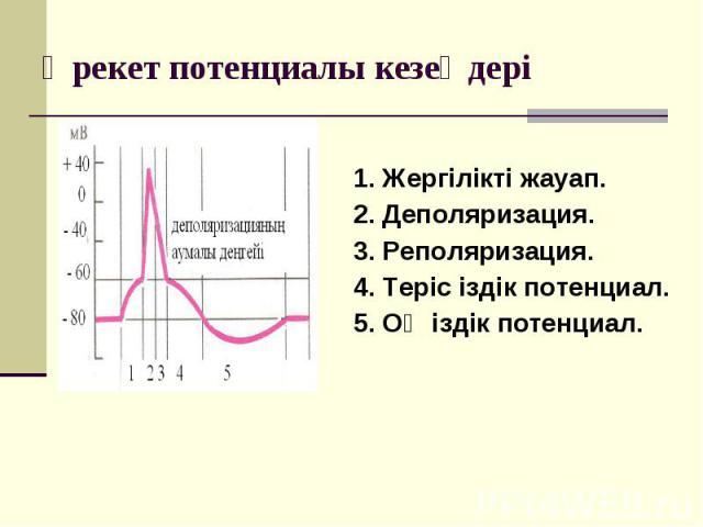 1. Жергілікті жауап. 2. Деполяризация. 3. Реполяризация. 4. Теріс іздік потенциал. 5. Оң іздік потенциал.