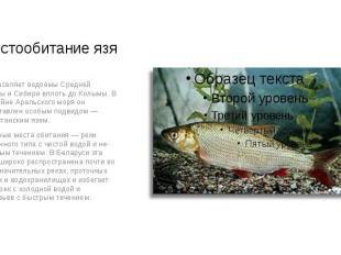 Местообитание язя Язь населяет водоёмы Средней Европы и Сибири вплоть до Колымы.