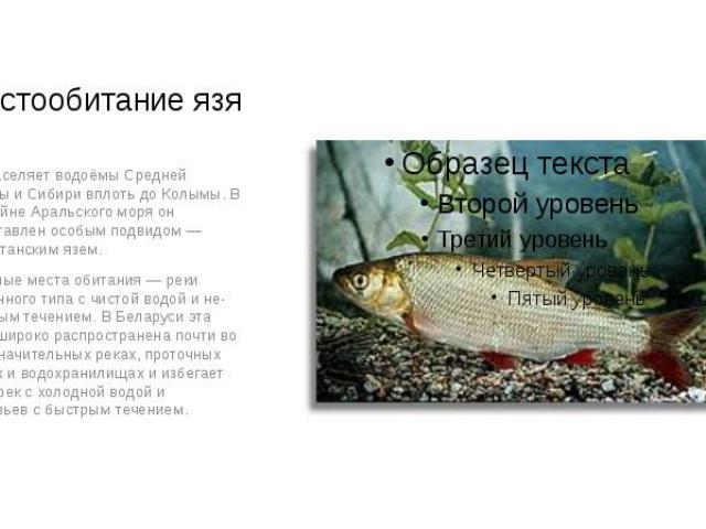 Местообитание язя Язь населяет водоёмы Средней Европы и Сибири вплоть до Колымы. В бассейне Аральского моря он представлен особым подвидом — туркестанским язем. Обычные места обитания — реки равнинного типа с чистой водой и небыстрым течен…
