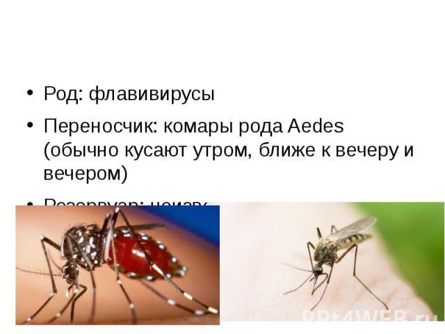 Род: флавивирусы Переносчик: комары рода Aedes (обычно кусают утром, ближе к вечеру и вечером) Резервуар: неизвестен