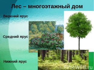 Лес – многоэтажный дом