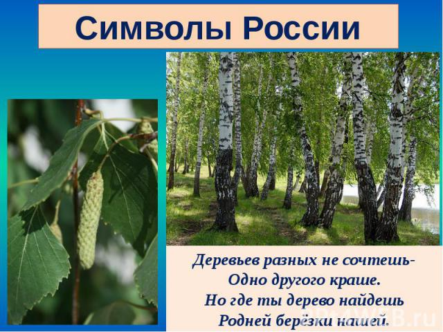 Деревьев разных не сочтешь- Деревьев разных не сочтешь- Одно другого краше. Но где ты дерево найдешь Родней берёзки нашей.