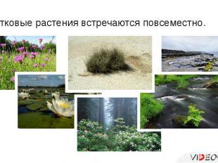 Цветковые растения встречаются повсеместно.