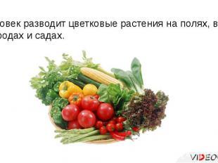 Человек разводит цветковые растения на полях, в огородах и садах.
