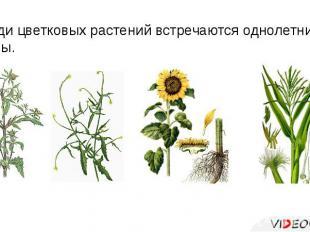 Среди цветковых растений встречаются однолетние травы.