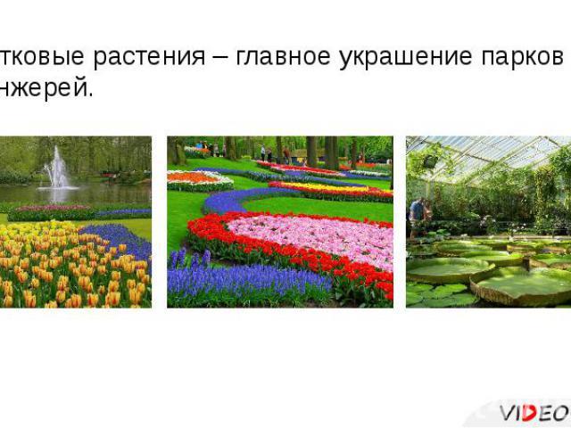 Цветковые растения – главное украшение парков и оранжерей.