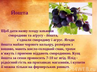 Щоб дати назву плоду кохання смородини та аґрусу - йошта, з'єднали смородину і а