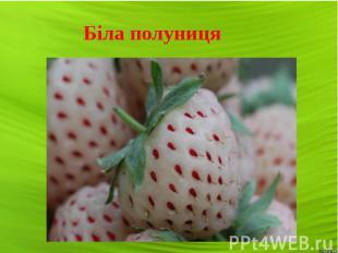 Біла полуниця