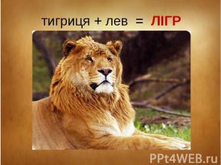 тигриця + лев = ЛІГР