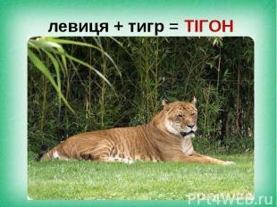 левиця + тигр = ТІГОН