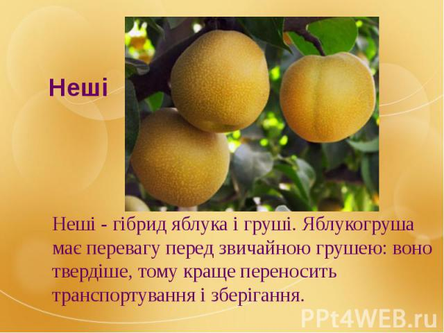 Неші - гібрид яблука і груші. Яблукогруша має перевагу перед звичайною грушею: воно твердіше, тому краще переносить транспортування і зберігання. Неші - гібрид яблука і груші. Яблукогруша має перевагу перед звичайною грушею: воно твердіше, тому кращ…