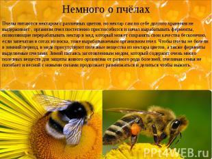 Немного о пчёлах Пчелы питаются нектаром с различных цветов, но нектар сам по се