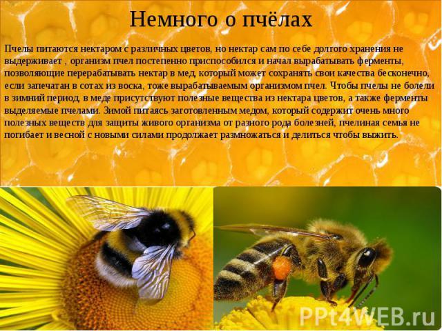Немного о пчёлах Пчелы питаются нектаром с различных цветов, но нектар сам по себе долгого хранения не выдерживает , организм пчел постепенно приспособился и начал вырабатывать ферменты, позволяющие перерабатывать нектар в мед, который может сохраня…