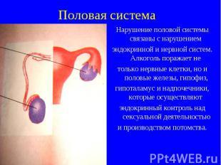 Нарушение половой системы связаны с нарушением Нарушение половой системы связаны
