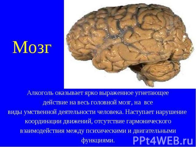 Алкоголь оказывает ярко выраженное угнетающее Алкоголь оказывает ярко выраженное угнетающее действие на весь головной мозг, на все виды умственной деятельности человека. Наступает нарушение координации движений, отсутствие гармонического взаимодейст…