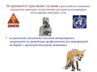 Не признаются страховыми случаями утрата (гибель) племенных, породистых животных