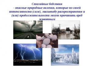 Стихийные бедствия - опасные природные явления, которые по своей интенсивности (