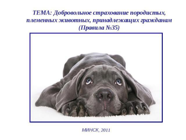 ТЕМА: Добровольное страхование породистых, племенных животных, принадлежащих гражданам (Правила №35) МИНСК, 2011