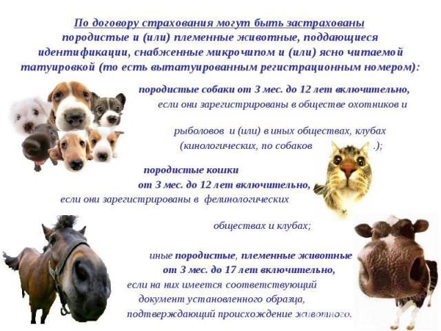 По договору страхования могут быть застрахованы породистые и (или) племенные животные, поддающиеся идентификации, снабженные микрочипом и (или) ясно читаемой татуировкой (то есть вытатуированным регистрационным номером): породистые собаки от 3 мес. …